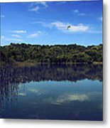 Regardless Of The Blues Metal Print by Laurie Search