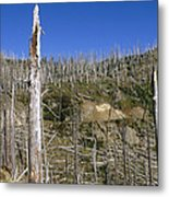 Regrowth Since Eruption Mt Saint Helens Metal Print