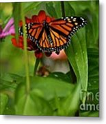 Regular Visitor Metal Print