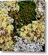 Reindeer Moss And Lichens Metal Print