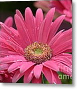 Rejoice It's Spring Metal Print
