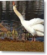 Relaxed Swan Metal Print