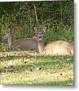 Relaxing In The Sun And Shade Metal Print
