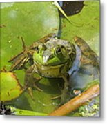 Relaxing On A Lily Pad  Metal Print