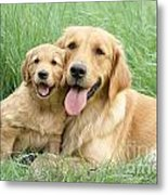 Relaxing Retrievers Metal Print