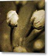 Renewal Of Life Metal Print