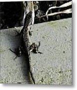 Reptile Metal Print