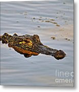 Reptile Reflection Metal Print
