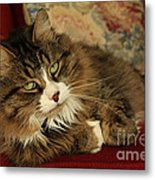 Rescue Cat Living In The Lap Of Luxury Metal Print