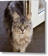 Rescue Cat Looks For Forever Home Metal Print