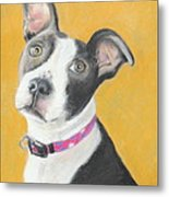 Rescued Pit Bull Metal Print