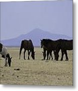 Reservation Horses 4 Metal Print