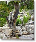 Resilient Tree Metal Print