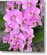Resplendent Orchid Metal Print