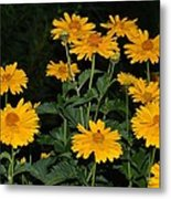 Resplendent Yellows Metal Print