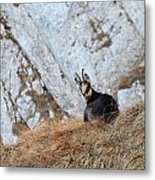 Rest In The Mountains Metal Print