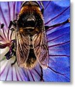 Resting Bee Metal Print