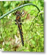 Resting Brown Dragonfly Metal Print