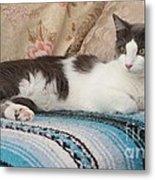 Resting Cat Metal Print