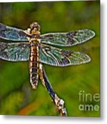 Resting Dragonfly Metal Print
