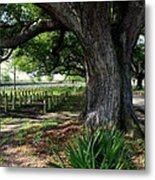 Resting In The Shade Metal Print by Beth Vincent