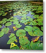 Resting Lilly Pads Metal Print