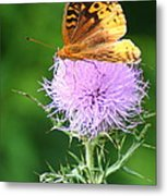 Resting On A Thistle Metal Print