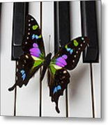 Resting On The Piano Metal Print by Garry Gay