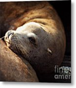 Resting On The Pier Metal Print