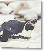Resting Penguin Metal Print