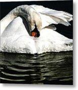 Resting Swan Metal Print