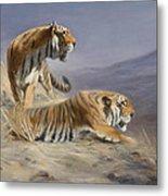 Resting Tigers Metal Print
