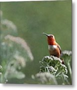 Resting With Nature Metal Print