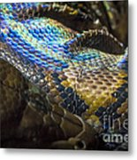 Reticulated Python With Rainbow Scales 2 Metal Print