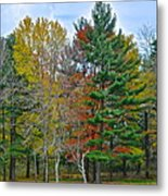 Retreating Pines Metal Print