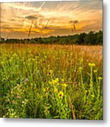 Retzer Wildflower Sunset Metal Print