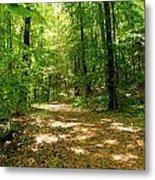 Wooded Path 16 Metal Print