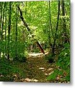 Wooded Path 17 Metal Print