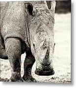 Rhino After The Rain Metal Print by Mike Gaudaur