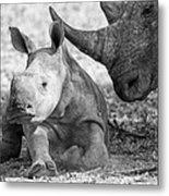 Rhino And Baby Metal Print