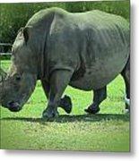 Rhino And Friend Metal Print