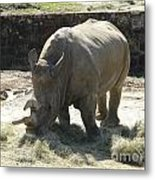 Rhino Eating Metal Print