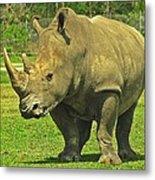 Rhino Look Metal Print