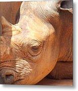 Rhino Naptime Metal Print
