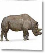Rhinoceros Metal Print