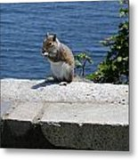 Rhode Island Squirrel Metal Print