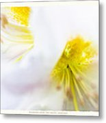 Rhodendron 'walter Maynard' - Spring Flowers Metal Print by Saxon Holt