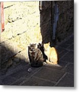 Rhodes Cat Trio Metal Print