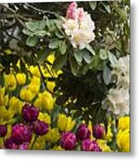 Rhodies And Tulips Metal Print