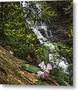 Rhododendron At The Falls Metal Print